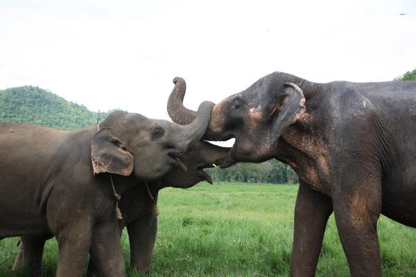 几乎每个来到泰国旅行的人都想体验骑大象