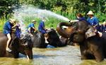 ELEPHANT LAMPANG