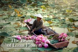 The Beauty of Lotus Flower