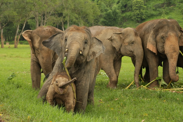 泰国大象节