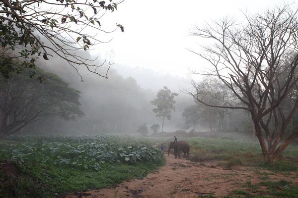 遇见最美的大象
