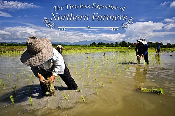 雨季和美丽的泰国稻田