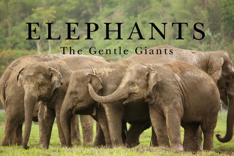 美丽且温和的大象