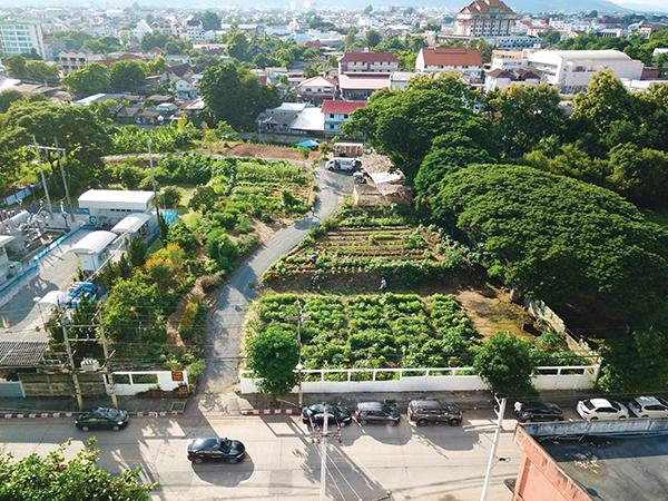 สวนผักคนเมืองเชียงใหม่