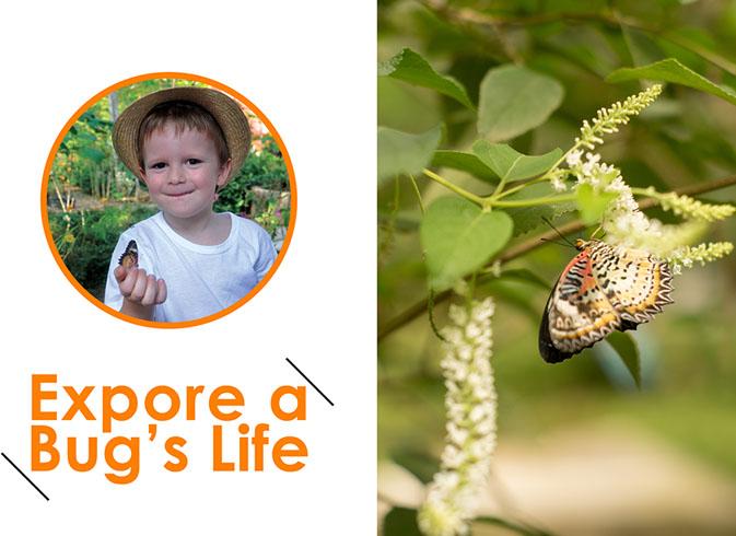 Explore a Bug's Life