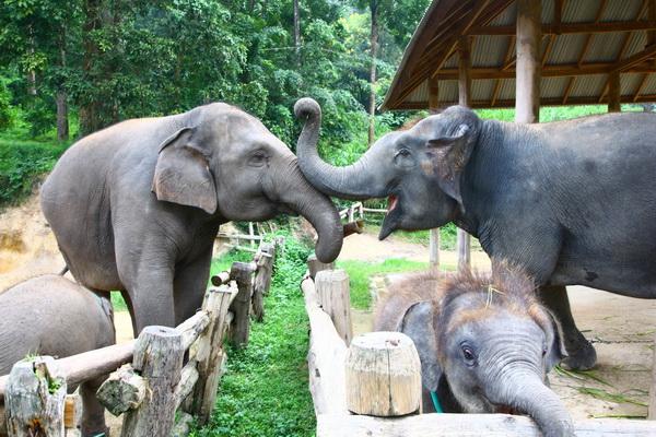 NATURE HAPPY ELEPHANTS