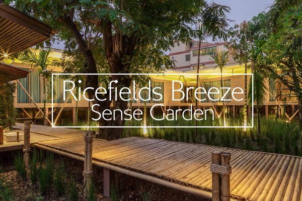Ricefields Breeze