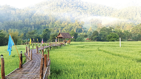 TRAVEL TO PAI