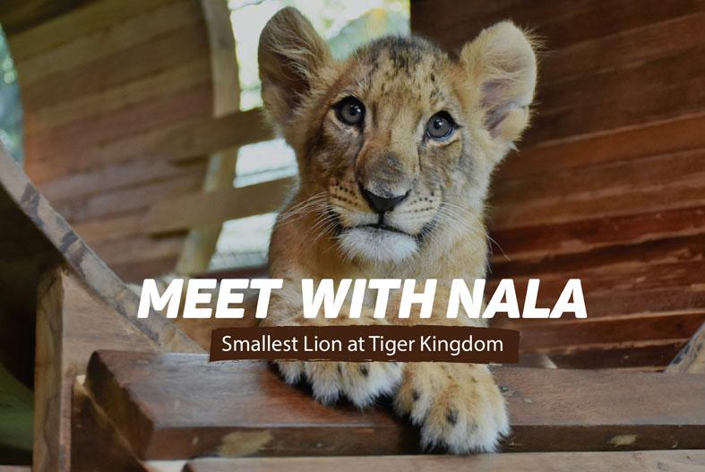 MEET WITH NALA