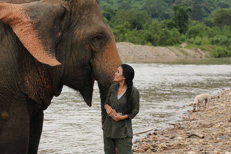 To Ride or Not To Ride AN ELEPHANT in Thailand?