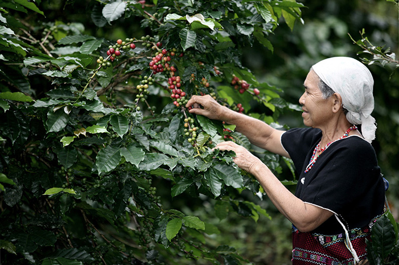 ORGANIC COFFEE - FAIR TRADE